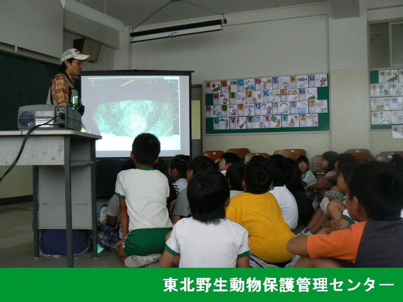 小学生を対象とした野生動物の生態に関する講演